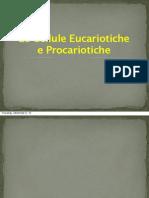(s6ita - bi4ita) Presentazione - Fabio BOTTANI - Le Cellule Eucariotiche