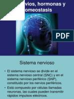 Nervios+Hormonas+y+Homeostasis+110202