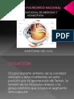 Anatomia Del Ojo - Copia
