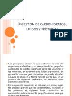 Digestión de carbohidratos, lípidos y proteínas