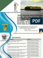 Programa de Diplomado