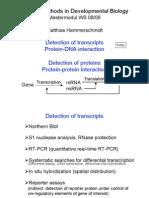 DNA mRNA Protein