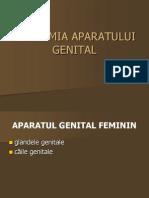 Anatomia Aparatului Genital