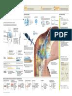 Atroscopia de Rodilla Infografico