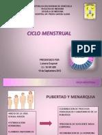 Seminario Ciclo Menstrual