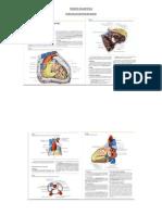 Temario de Anatomia 2