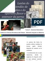 seminario_anatomia