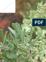 Determining the best statistical models for estimating the forage yield of  Atriplex canescens  (Purush) Nut. in Kahrizak area (Iran)