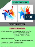 angiografias anatomia vascular