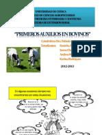 primeros auxilios en bovinos
