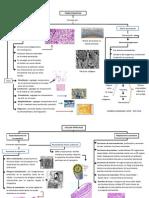 Tejido conjuntivo y células epiteliales