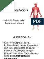 Otot Dan Fasia