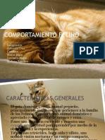 Etologia felinos domesticos