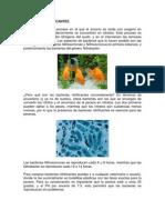 Bacterias Nitrificantes