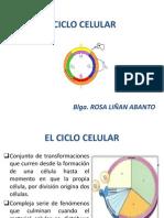Clase Ciclo Celular - Copia
