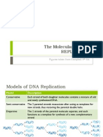 BIO3 - DNA Replication