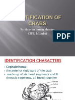 Identification of Crabs