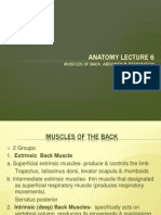 Anatomy Lecture 6
