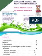 Aparato Reproductor Masculino_histologia