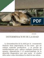 Cronometria de La Cabra...