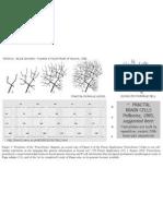 Simons MJ, Pellionisz Aj (2006) Genomics, Morphogenesis and Biophysics. Triangulation of Purkinje Cell Development. The Cerebellum (Springer); 2006;5(1):27-35.