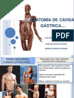Anatomía de cavidad gástrica