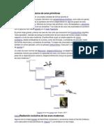 Diversificación cretácica de aves primitivas