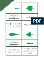 formes de les fulles amb descripció