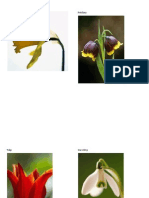 Flower Pictures Science