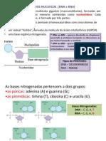 Acidos Nucleicos 1ano 3periodo