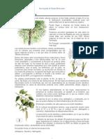 Enciclopedia de Plantas Medicinales - Fichas 01 de 15