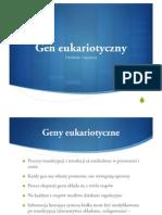 Gen Eukariotyczny II Rok 2008