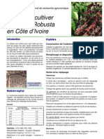 Cultiver Cafeier Robusta