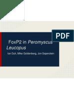 foxp2inperomyscusleucopus