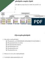 4. Phospholipid and Glycolipid Metabolism