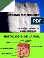 Fibras Del Ovino