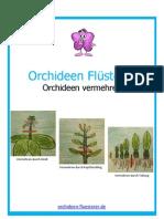 Orchideen Vermehren