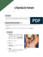 96255414 IV BIM 5to Ano Bio Guia 8 Aparato Reproductor Human