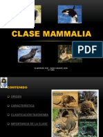 Clase Mammalia Diapositivas
