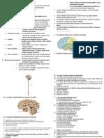 Sistema Nervioso Del Hombre Practica