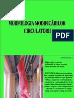 MORFOLOGIA MODIFICARILOR CIRCULATORII