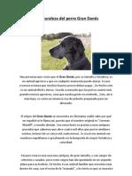 La naturaleza del perro Gran Danýýs