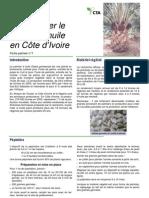 Cultiver Palmier