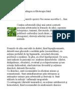 PLANTELE MEDICINALE - Www.drdorindragos.ro