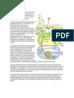 fotosintisis