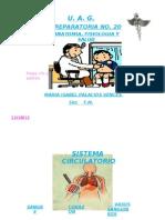 Exposicion Anatomia