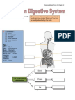 Exercise digestive system.pdf