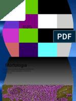 MRSA pdfs.odp
