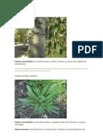 Guía plantas comestibles