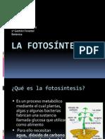 Botanica Trabajo Fotosintesis Cristina Collado